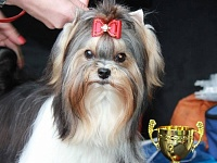 19.05.2018 Soligorsk (Belarus) Republican dogshow of all breeds. Republican dogshow of terriers