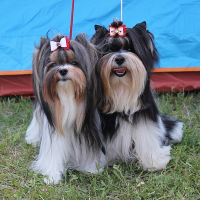 LITHUANIAN CYNOLOGICAL SOCIETY 2 INTERNATIONAL (2xCACIB) DOG SHOWS 28.05.16 MOLĖTAI CUP'16